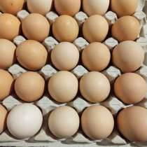 Купить инкубационное яйцо, в г.Баку