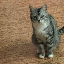 Отдам котят, в Нижнем Новгороде