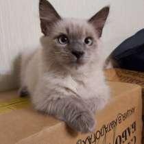 Коты и кошки, в Черноголовке