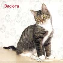 Малышка Васюта - прелестное котосоздание в добрые руки, в Москве