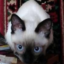 Продам котенка в связи с отъездом, в г.Луганск