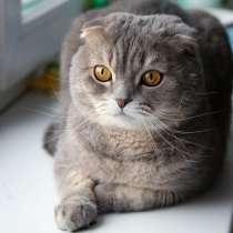 Кошка вислоухая 4 месяца срочно!, в Оренбурге