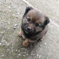 Собачка в добрые руки, в Константиновске