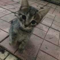 Котята в добрые руки, в Химках