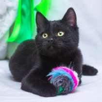 Обаятельный Черныш, котенок 5 мес в добрые руки, в Москве