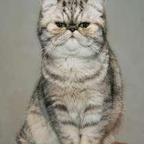 Экзотическая кошка, в г.Могилёв