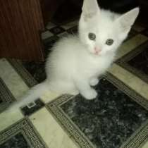 Отдам даром котят, в Калуге