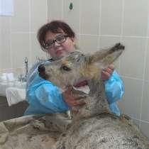 Ветеринарный врач высшей категории, в Березовский