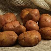 Домашня картопля, в г.Тернополь