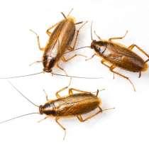 Борьба с клопами и тараканами в ПМР, в г.Тирасполь