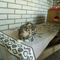 Продам веслоухие котят, в г.Запорожье