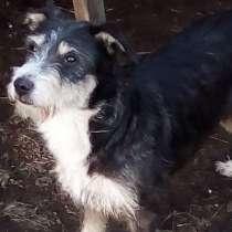 Собачка Дори- милейшее создание, в Челябинске
