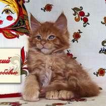 Котята мейн кун красные, в Москве