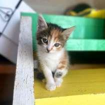 Крошки котята ищут дом, в Санкт-Петербурге