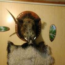 Продам голову кабана, в Саратове