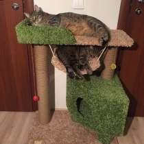 Домик для кошки, когтеточка, комплекс, в Санкт-Петербурге