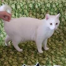 Кот двухлетний, кострированый, в Новосибирске