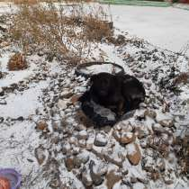 Помогите обрести собаке дом, в Новокузнецке
