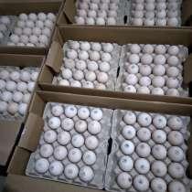 Продаю инкубационное яйцо индюшат, в г.Шклов