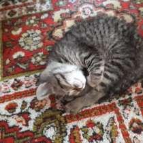 Кошечка тигрового окраса. Возраст 3 месяца, в г.Алматы