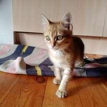 Котенок в добрые руки, в Иркутске