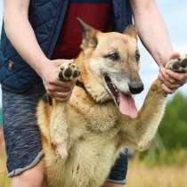 Пёс инопланетной внешности очень ищет дом, в Санкт-Петербурге
