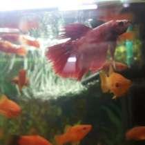 Аквариумные рыбки, в Кингисеппе