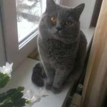 Котенок, в Челябинске