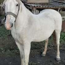 Лошадь, в Камне-на-Оби