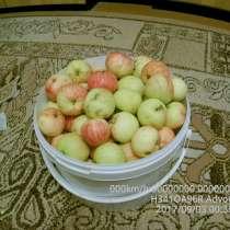 Яблоки, в Екатеринбурге