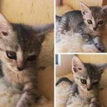 Котёнок девочка, в Краснодаре