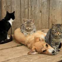 Куплю дворовых щенят и котят, в Оренбурге