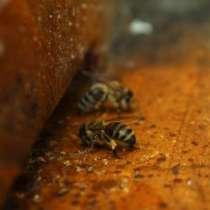 Продукт пчеловодства «Прополюкс» (Propolux), в г.Павлодар