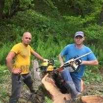 Спил деревьев, в Владикавказе