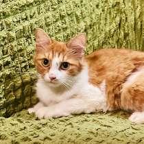 Рыжая кошка Лисан в добрые руки, в Москве