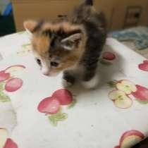 Малышка Тигра 1,5 мес, в Щелково