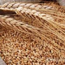 Фураж, корма для животных, семена, в Воскресенском