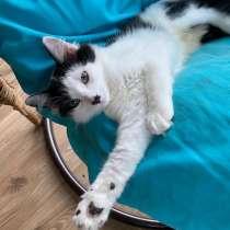Роскошный котёнок с пушистым хвостом, в Санкт-Петербурге