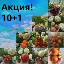 Семена сортовых томатов, в г.Алматы