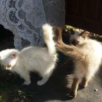 Котята в добрые руки, в Коврове