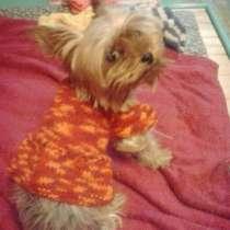 Вязанная одежда для собак, в Новосибирске