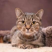 Мия - добрая, теплая кошка, в дар, в добрые руки, в Москве