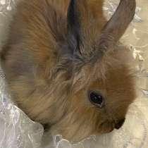 Декоративные кролики, в Собинке