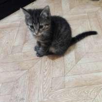 Отдам котят в добрые руки, возраст 2 месяца, к лотку приучен, в Луховицах