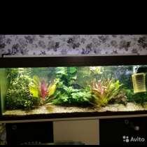Продам аквариум, в Канске