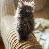 Пушистые котята в дар, в г.Лида