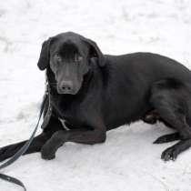 Благородный и черный как ночь молодой пес, в Санкт-Петербурге