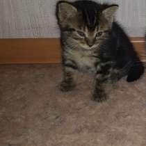 Отдам в добрые и заботливые руки котенка)), в Шерегеше