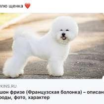Куплю щенка Бишона Фризе, в г.Тбилиси