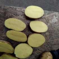 Картофель от производителя оптом, в Москве